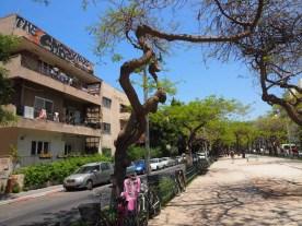 Rothschild Boulevard in Tel Aviv