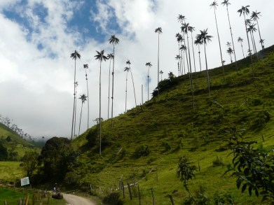 Kolumbien_Wachspalmen