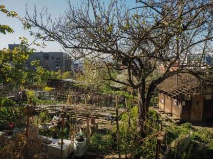 Kobe Terrace Seattle