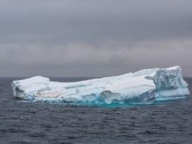 Eisberge bei Half Moon Island, Antarktis