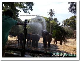 ElephantsEnjoyingWater