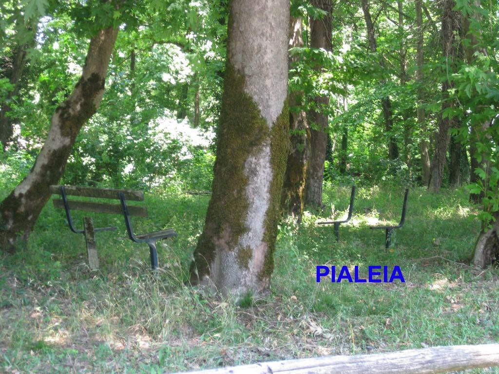 Pialeia (1) copy