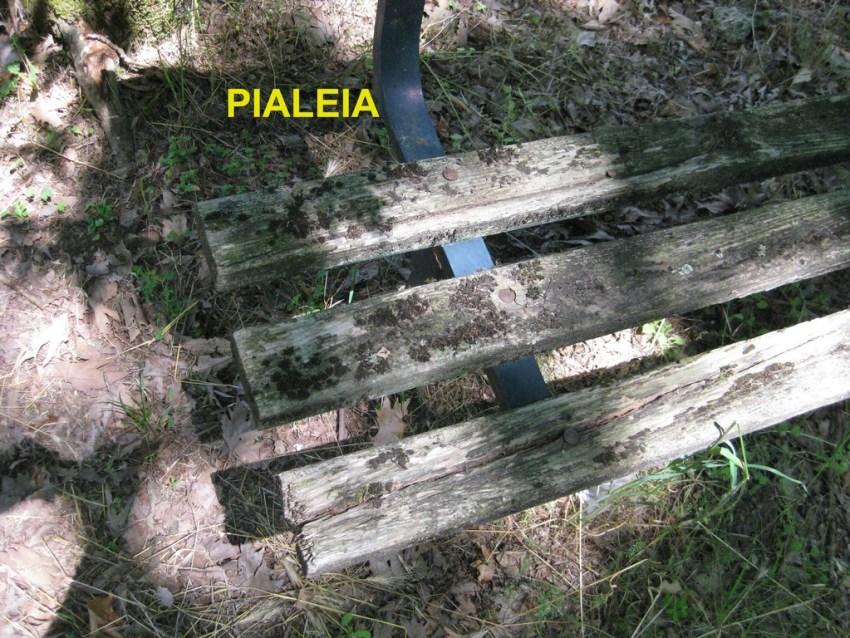 Pialeia (2) copy
