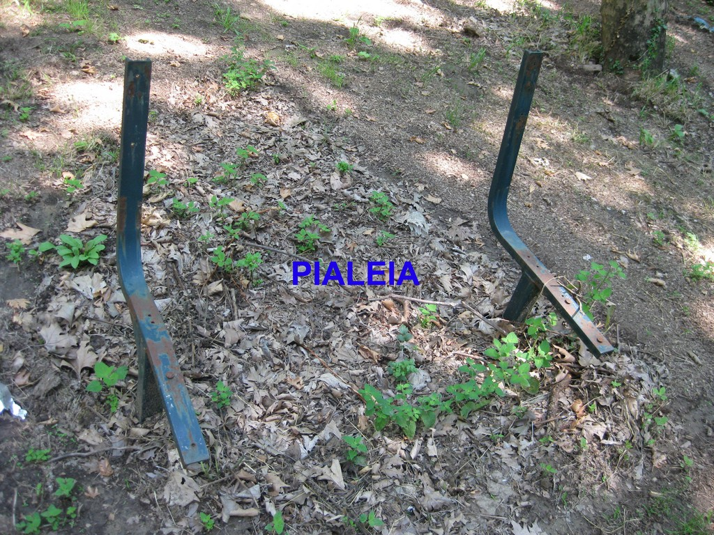 Pialeia (4) copy