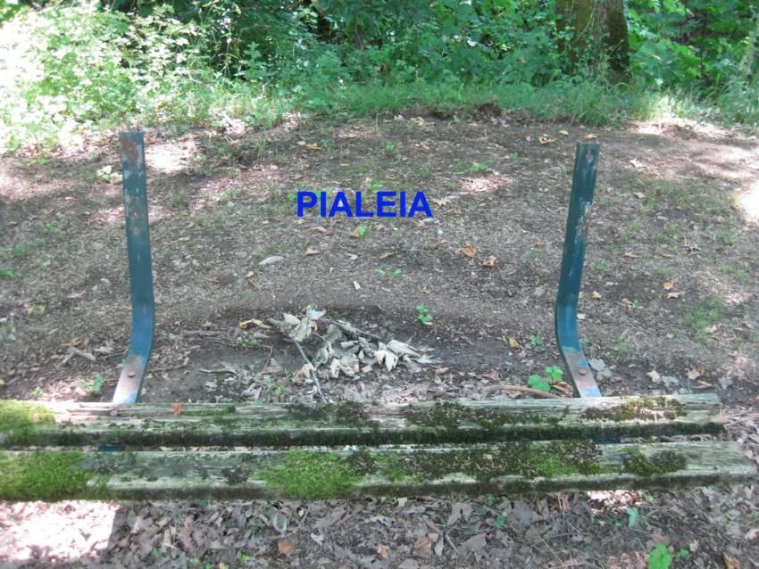 Pialeia (5) copy