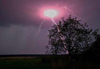 tree_storm_344