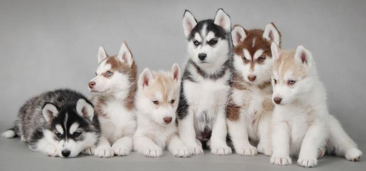 puppie-choise2
