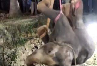 India_elephant_YT_2011_1