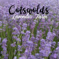 Cotswolds Lavender Farm em Oxford