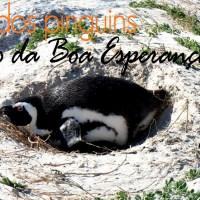 O Cabo da Boa Esperança e a Baía dos Pinguins