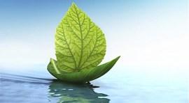 Productos ecológicos por su salud