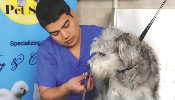 Venus & Dalila Pet Spa cuida tu mascota en Queens