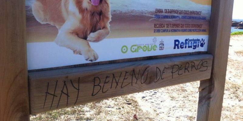 Playas para perros Grove