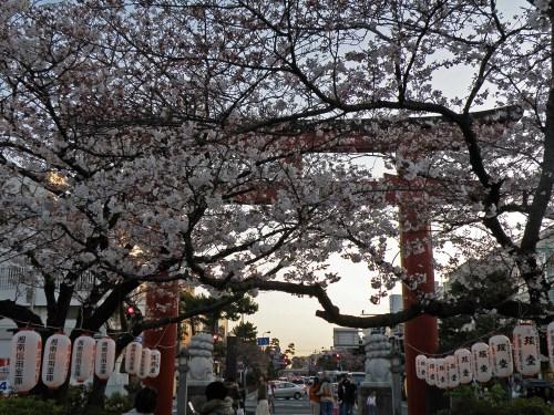 Paseo hacia el Santuario Tsuruoaga Hachimangu en Kamakura