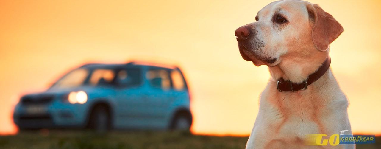 Viajar com animais: conselhos para os levar no carro