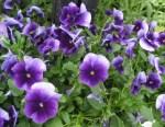 spring-flowers-12