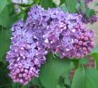 spring-flowers-5