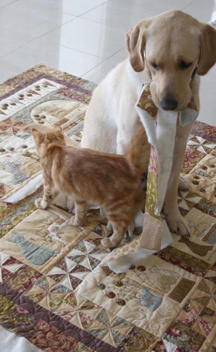 A Kittens Tale