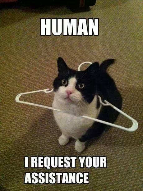 Top 25 Best Funny Animal Pics #Humor