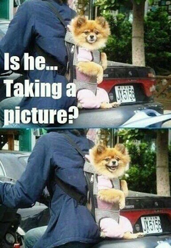 Top 25 Best Funny Animal Pics