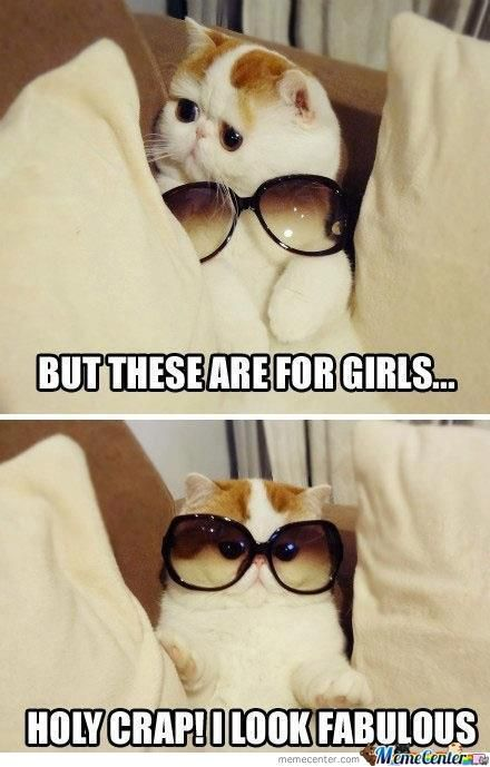Top 25 Best Funny Animal Picture Quotes #Humor