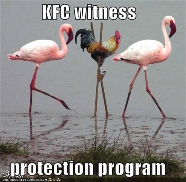 Top 25 Funny Animal Memes