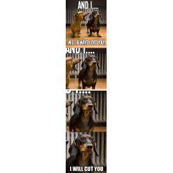 Small Crop Of Dog Joke Meme