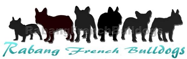 French Bulldogs Hawaii