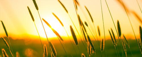 https://www.pexels.com/photo/summer-sun-warmth-field-9568/