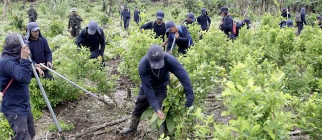 erradicacion-cultivos-coca-640x280-15082012