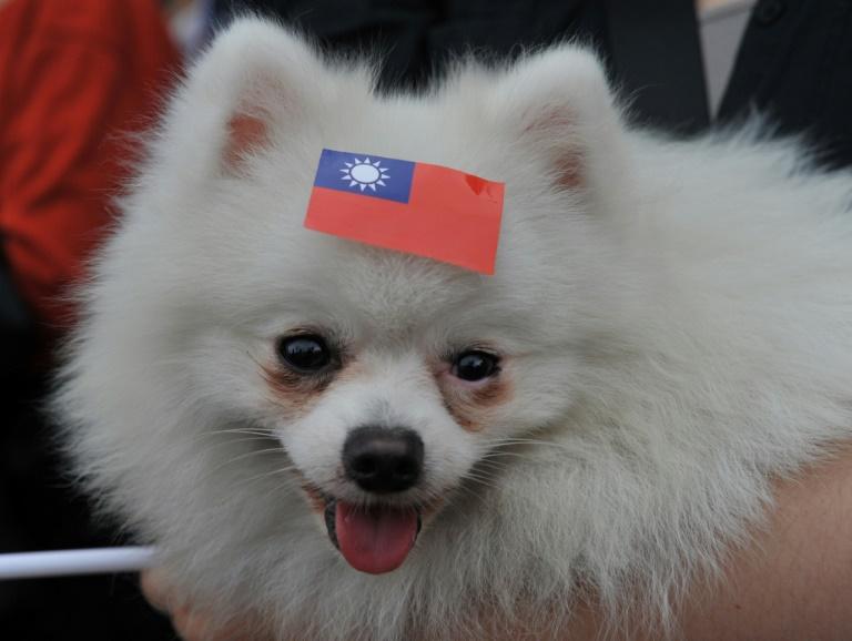 Un perro con una etiqueta con la bandera de Taiwán en una manifestación en Taipei el 4 de mayo de 2014 AFP/Archivos / Mandy Cheng