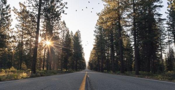 Una carretera sobre la que vuelan unos pájaros. Imagen: Levi Bare