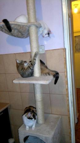 bona pisici 3