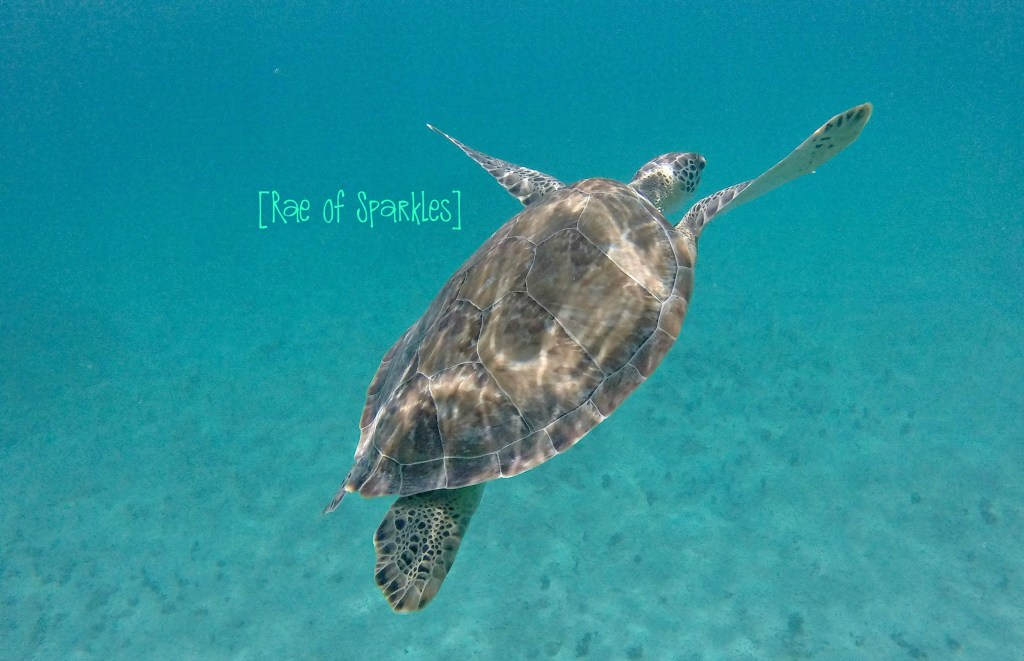 Snorkeling with Sea Turtles on Water Island, USVI