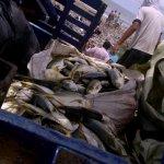 Pesca en salgar