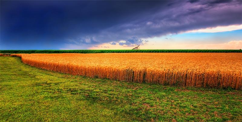 RAFI_Crop_Insurance_Featured_Image_Kansas_Summer_Wheat_and_Storm_Panorama