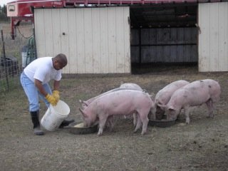 Athan Lindsay tends to his hogs.