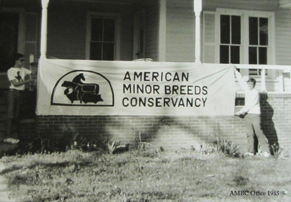 1985 AMBC Office