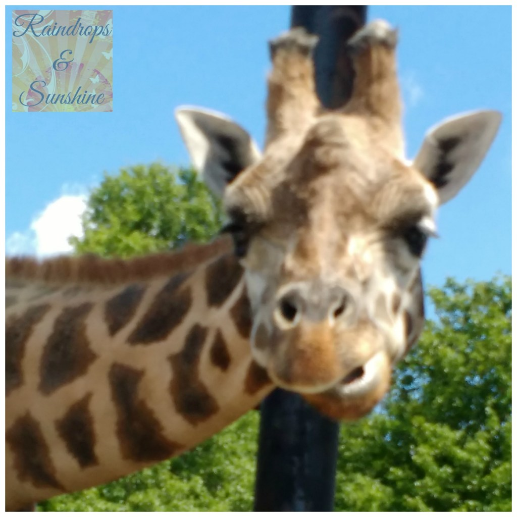 Safari Niagara More Than Just a Zoo #FamilyTravel