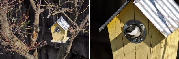 Birdhouse_ChickadeeInside