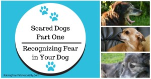 Scared Dog, Fearful Dogs Pt. 1   Recognizing Fear in Your Dog