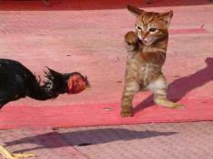 r_1227913727_cat-turkey-smackdown