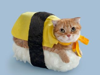 Sushi-Cat-Halloween-Costume1
