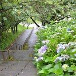 紫陽花のある風景(天沢小学校下の階段)