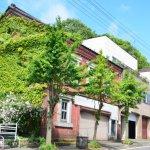旧山口紙店の蔦とバラ