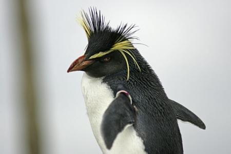 ペンギン7