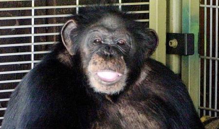 チンパン1