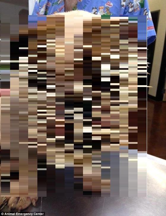 20130331000753_8_1.jpg