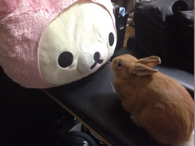 ウサギ11