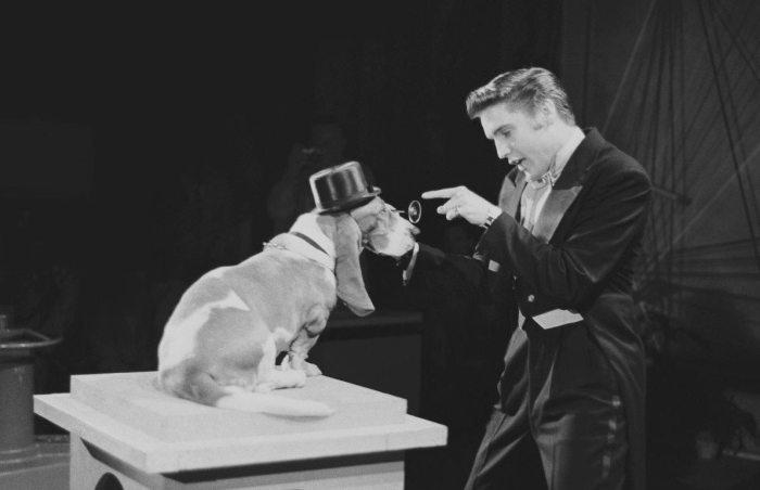 Elvis_1956_tuxedo_dog_1200x800dark